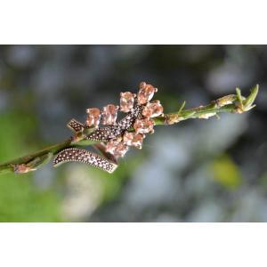 STONEAGE Zirkon Taşlı Yaprak Ayarlanabilir Bayan Yüzük